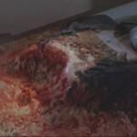 'The Blob' (1988)