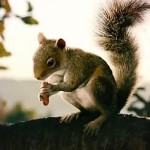 Predprodukcijski trailer za 'Squirrels'